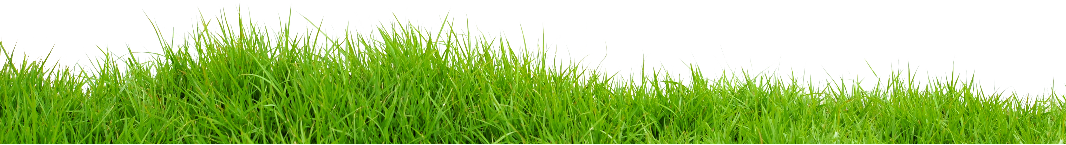 Lawns in Order | Lawn and Property Maintenance